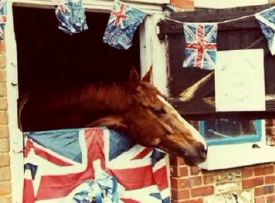 Aldaniti back home in his decorated stable after winning the Grand National
