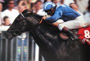 Willie Carson on Dayjur winning the Nunthorpe Stakes at York in 1990