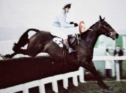 Richard Dunwoody's first National Hunt win on Game Trust at Cheltenham in 1983