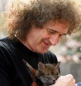 Brian May with a rescued fox cub