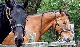 Monaughty Man (left) & Quixall Crossett